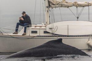 walvis-spotten